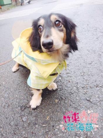 竹東河濱公園毛孩樂園 結合春櫻活動開跑囉!