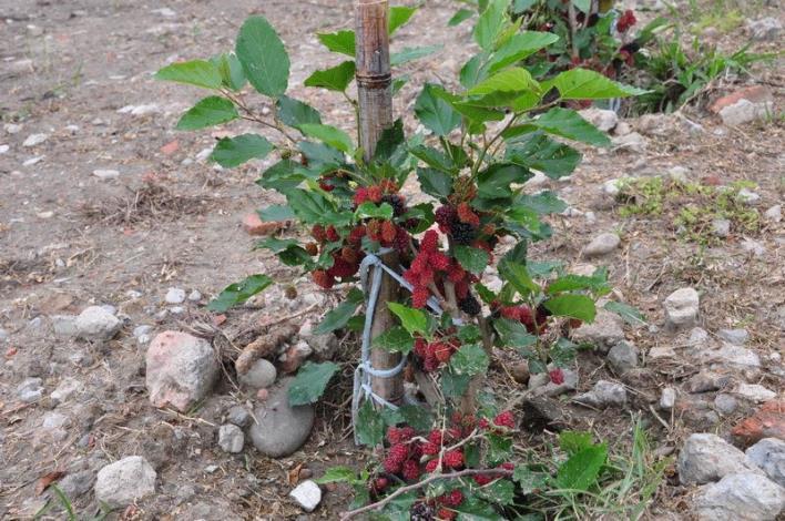 翻轉刻板印象 政府與民間開發全台首座「食物森林」
