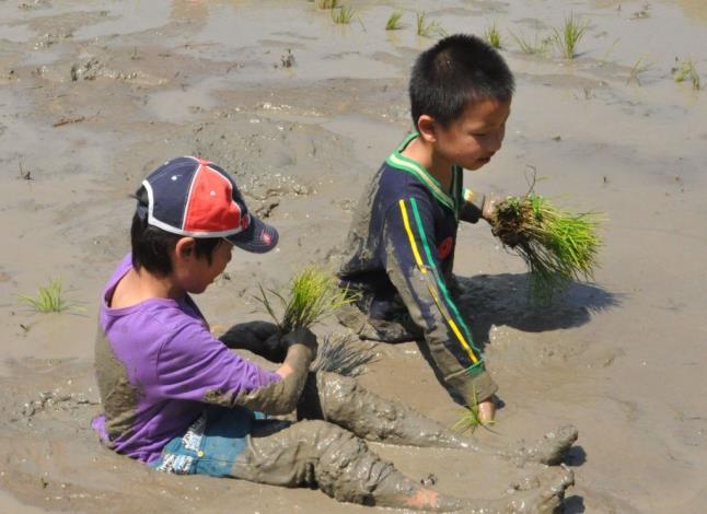 是插秧也是水牛打滾 北埔南外社區稻米推廣活動寓教於樂