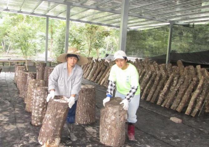發展高經濟特色產業    新竹縣獲中央補助2820萬打造「五峰雪霸菇」