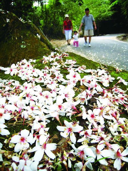 花現橫山-2019客家桐花祭      4/27大山背樂善堂熱鬧登場