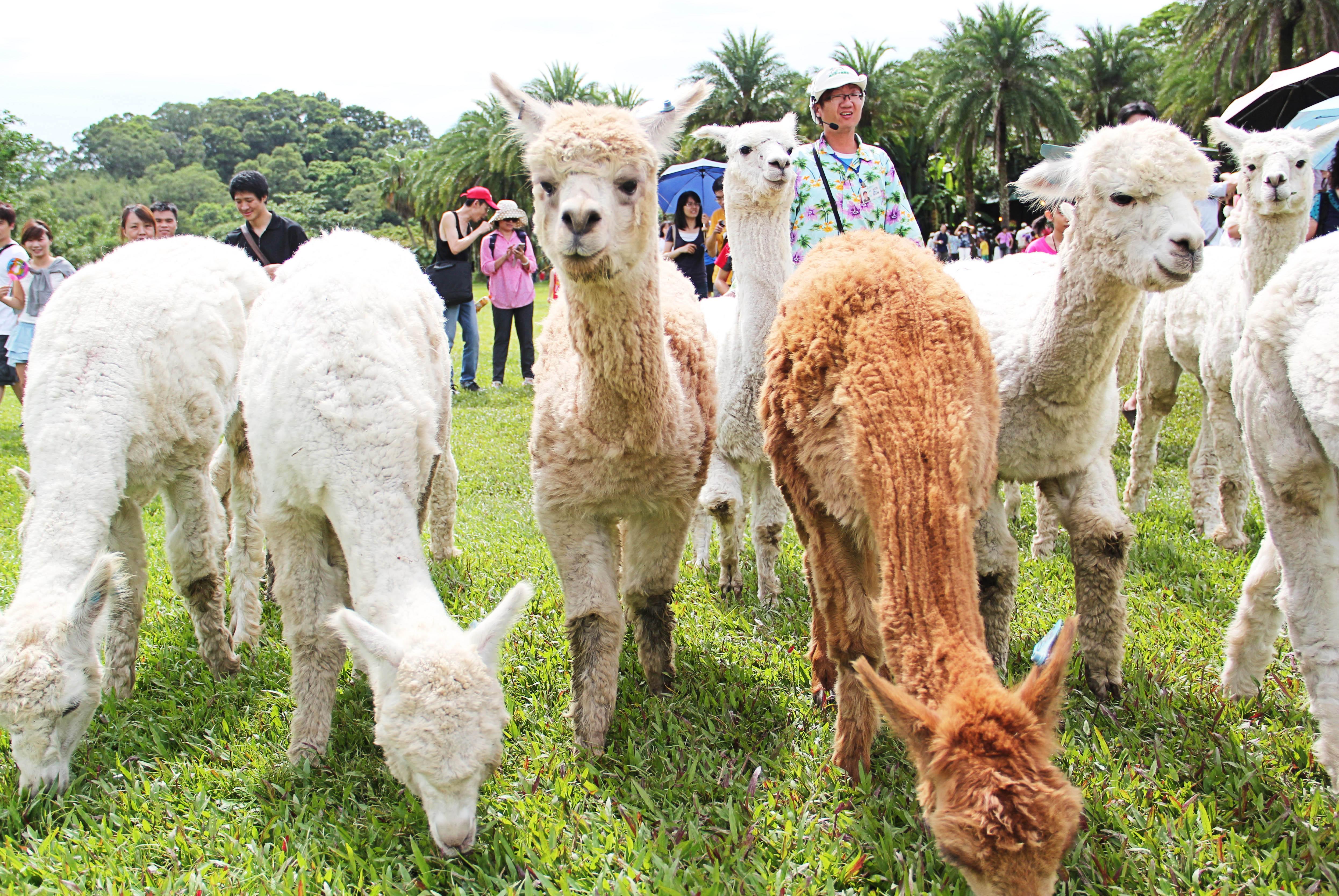 歡迎來新竹縣使用「農遊券」!休閒農場、農民直銷站及農村社區好康報你知 共3張圖片
