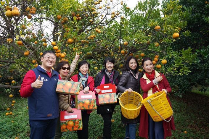 峨眉農產好年禮 桶柑禮盒好討喜 桔園餐桌來報名 經典小鎮博柑情