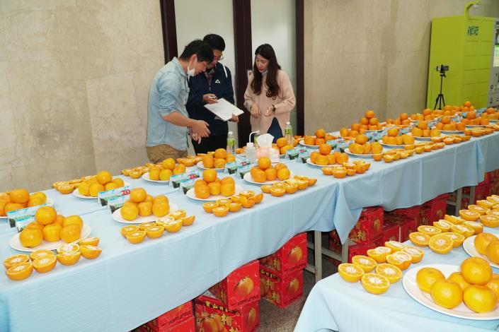 寶山椪柑今年產量少6成 品質更優平均糖度達14度 共5張圖片