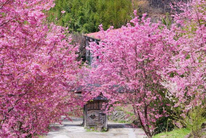 春節走春首選竹縣     精選山區夢幻美景看這裡