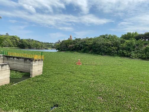 大埔水庫水質優養化嚴重      不適宜民生用水