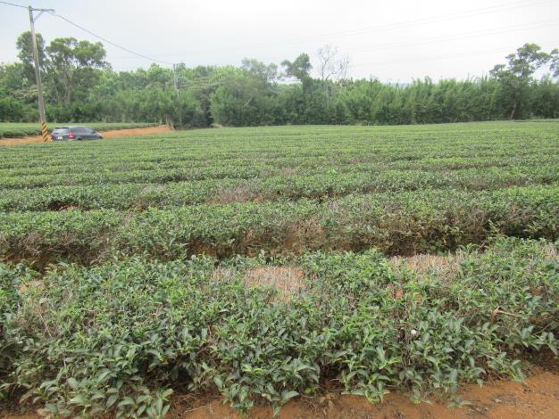 3-5月高溫乾旱農業天然災害現金救助