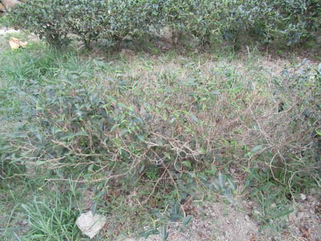 新竹縣110年3-5月高溫乾旱農業天然災害現金救助