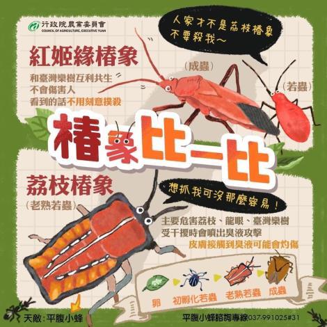 荔枝椿象vs紅姬缘椿象