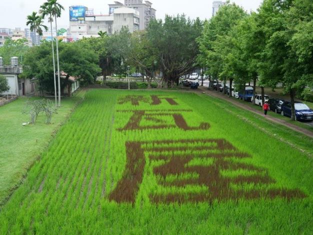 A new instagrammable place in Hsinchu County: New Tile House Rice Field Art