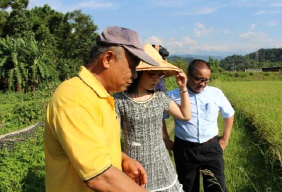 現場觀看種稻環境、稻鴨共養概念.PNG