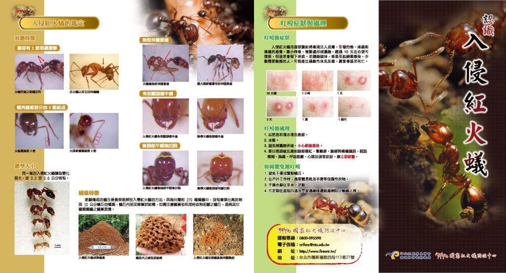 認識入侵紅火蟻